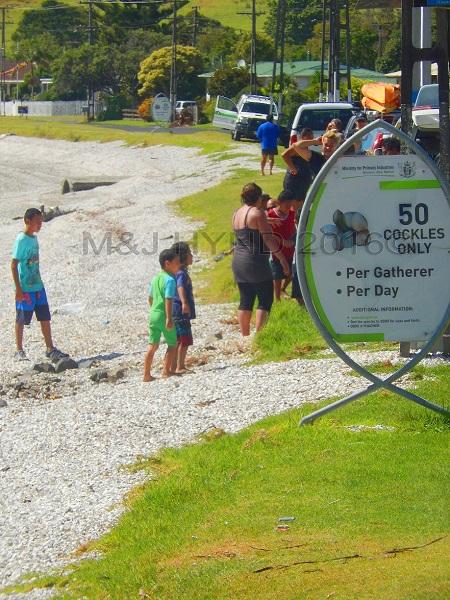 cockle picking 50 only!, Kawakawa Bay, NZ
