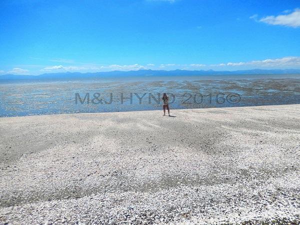 shelly beach, low tide, Miranda, NZ