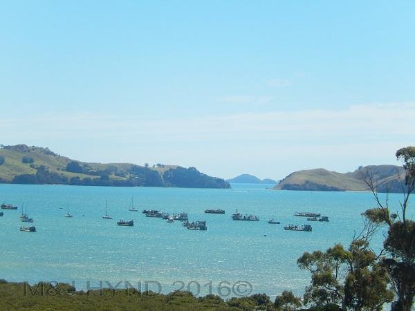 fishing boats in Te Kouma harbour, Coromandel, NZ