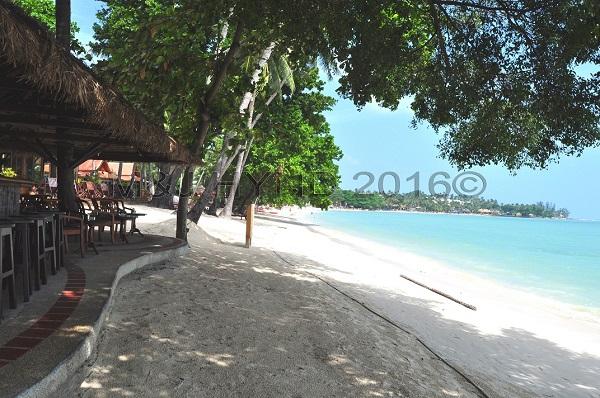 Chaweng Beach coconut palms, Koh Samui, Thailand