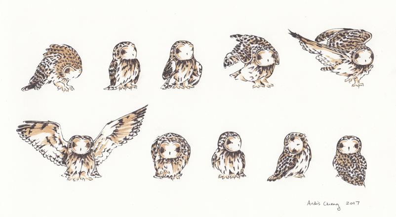 minimalist owls colour.png