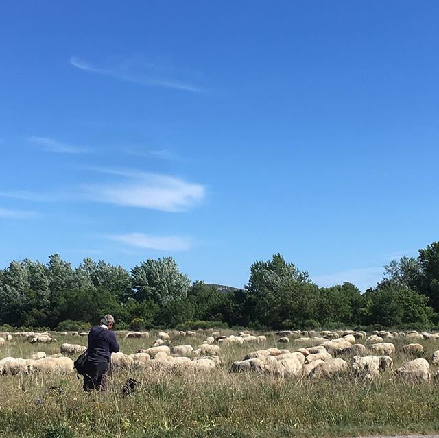 Suddenly in the middle of the fields.  #holidays #holiday #southoffrance #carcasonne #narbonne #corbieres #stay #fun #perfectplace #lagrasse #vacation #vacances #enjoy #wine #goodfood #fresh #walking #nature #randonnées #mouton #fromage #tripadviser #airbnb #zininfrankrijk #urlaub #vakantie #instatravel