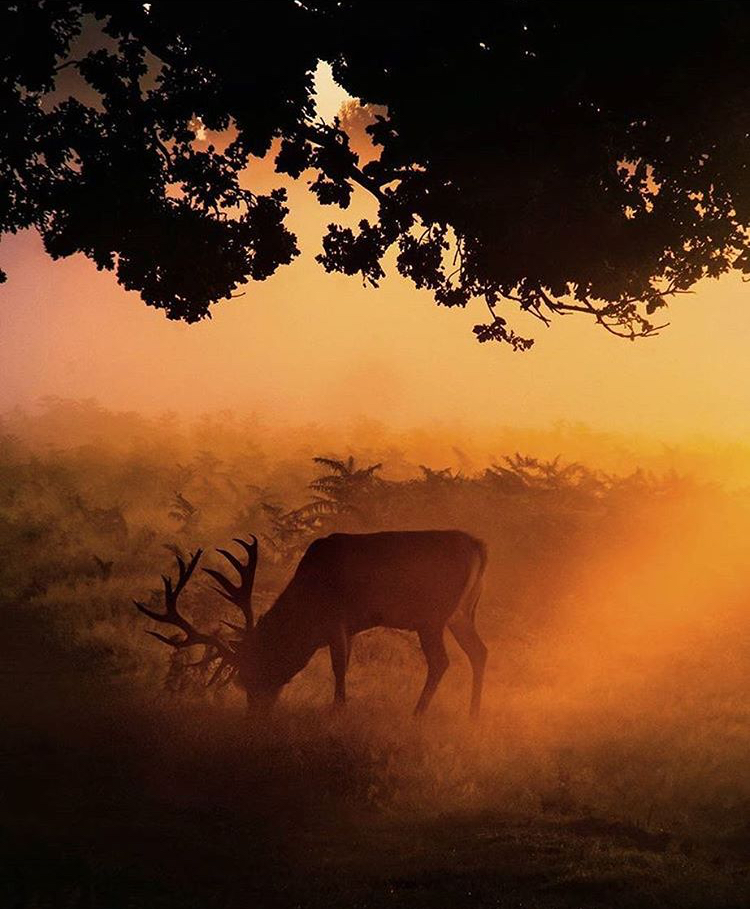 Bushy Park & Hampton Court - Visit the deer park at dawn or dusk, before or after your visit to Hampton Court. Pack your lunch, it's worth a full day.Nearby: Kingston upon Thames