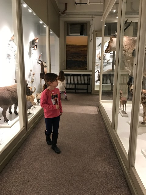 At the Harvard Museum of Natural History, late March 2017
