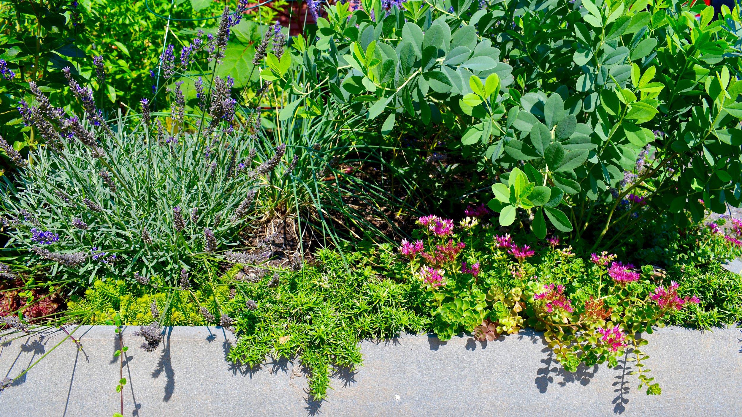 Bluestone edge and edible:flower garden.jpg