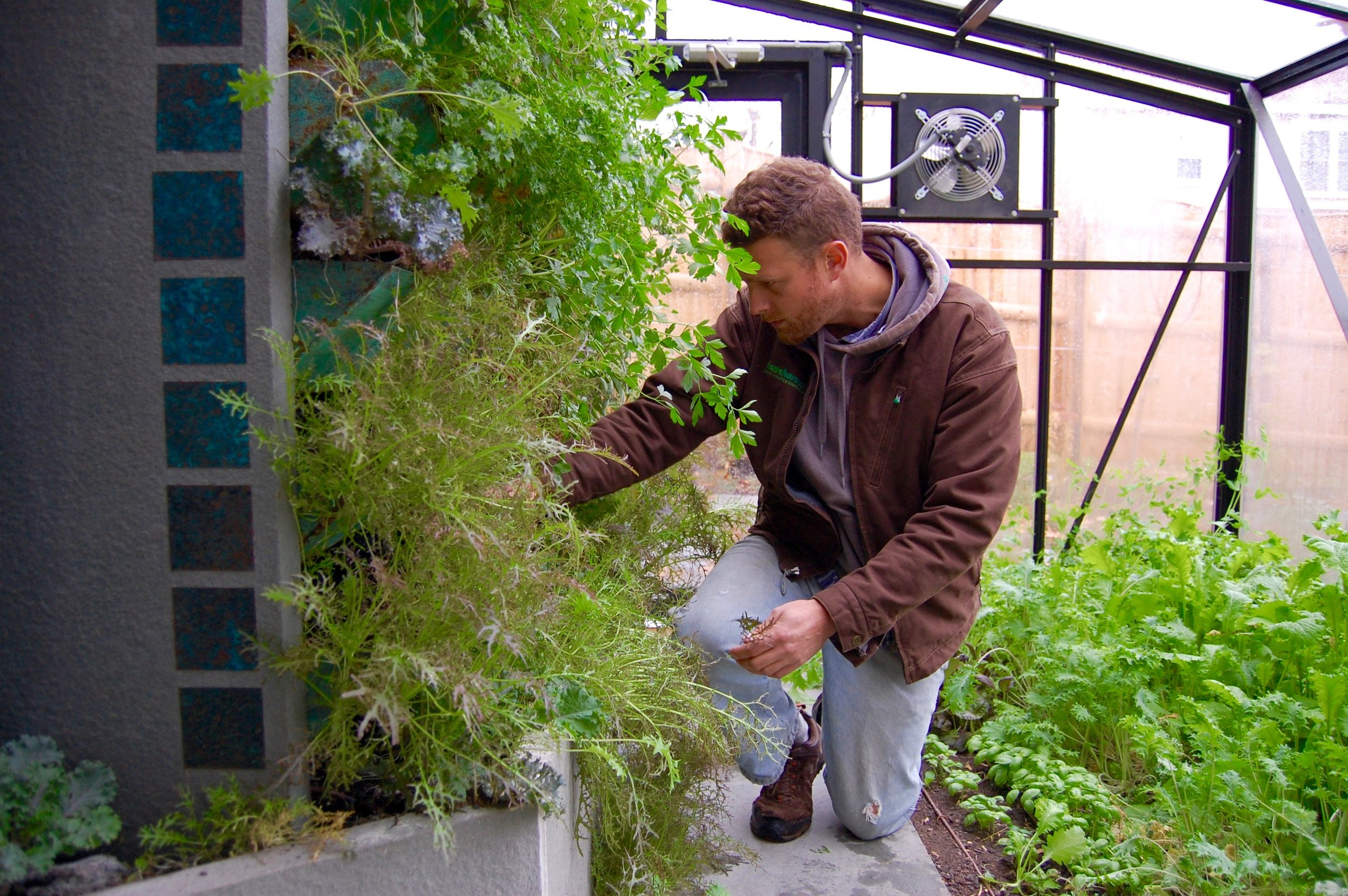 greenhouse service.jpg