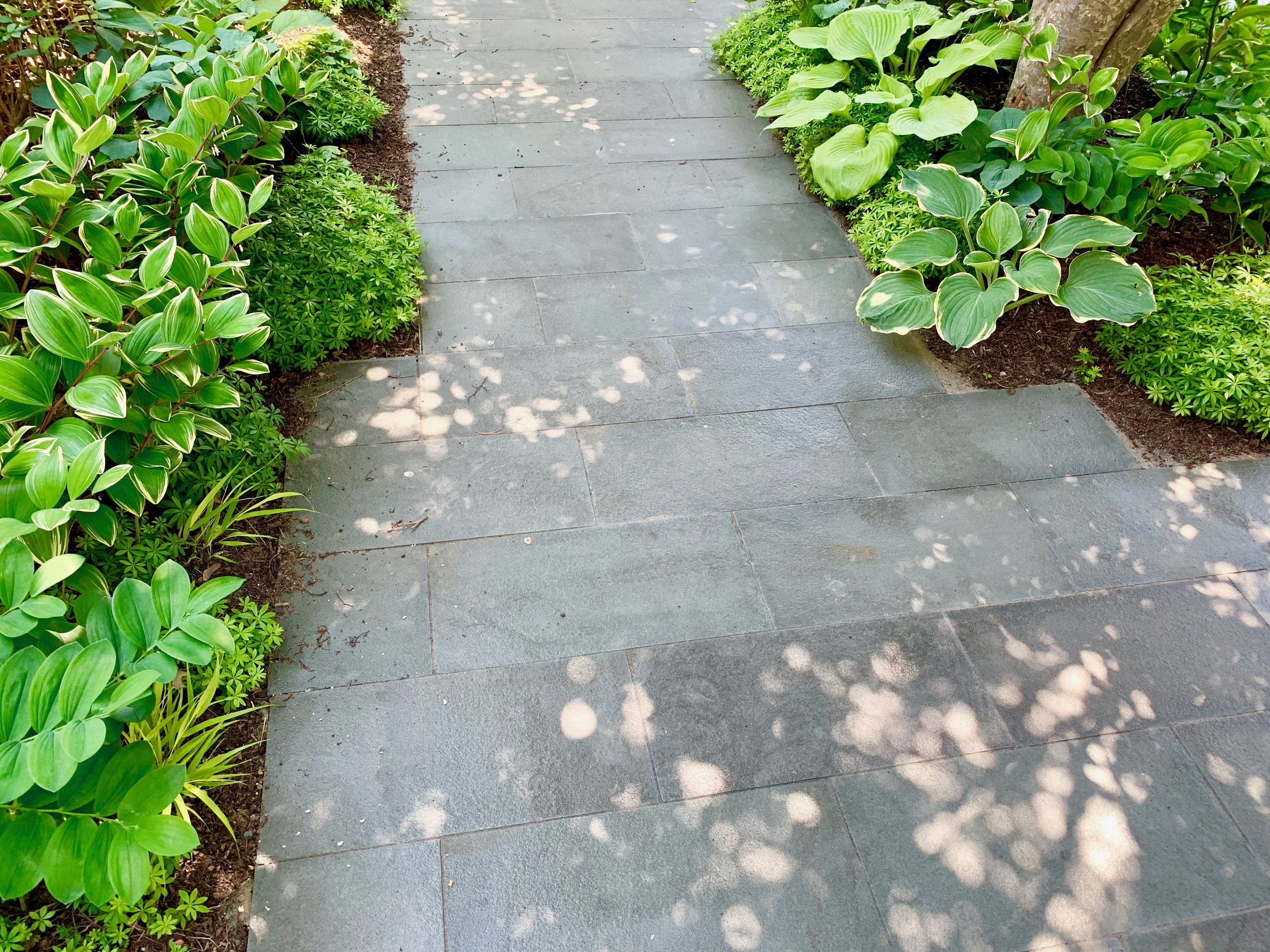 Bluestone patio, shade perennials 1.jpeg
