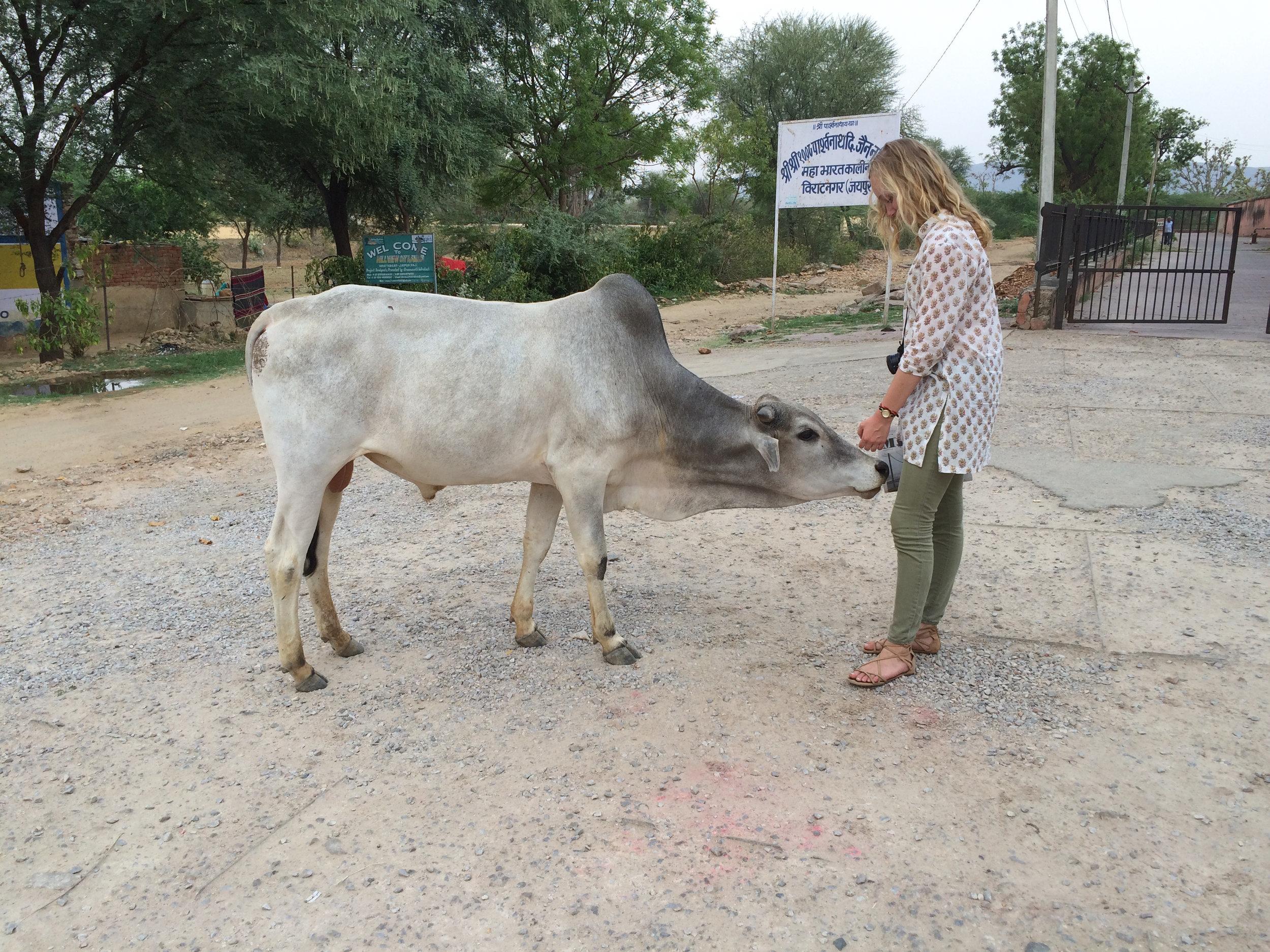 Sophia with the bull