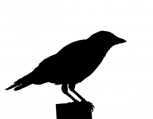 crow-bird-silhouette-clipart-1537941584QkR.jpg