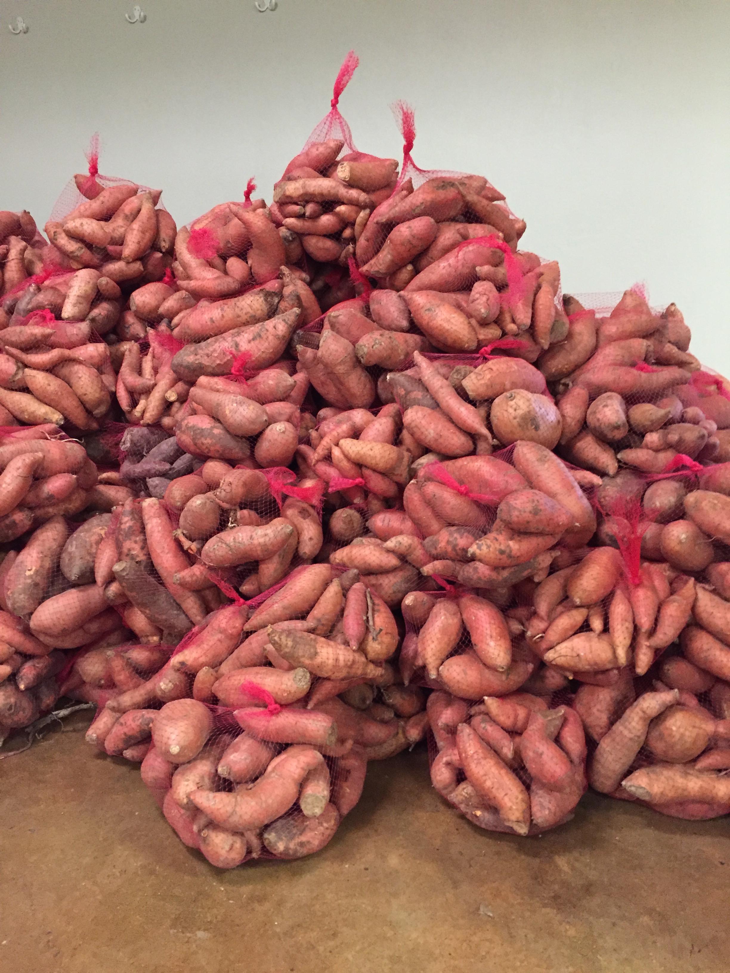 Sweet Potato Drop 2018-0425.JPG