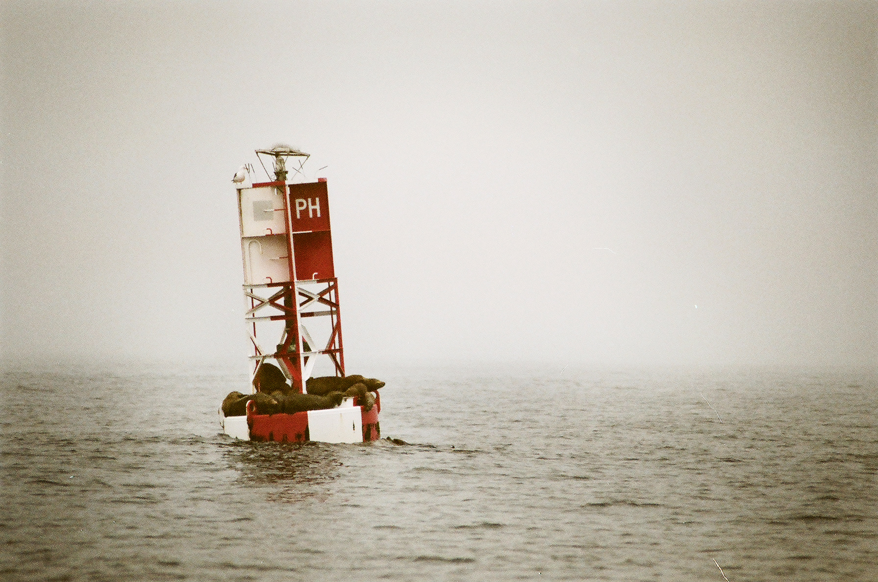 Sea Lions on a Buoy, Ventura, CA