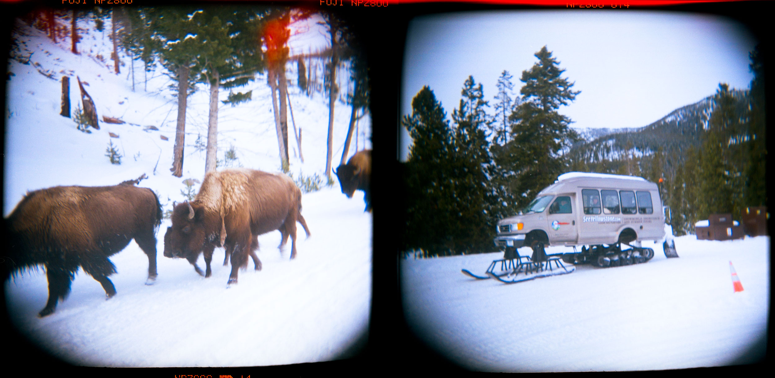 Yellowstone, MT Holga