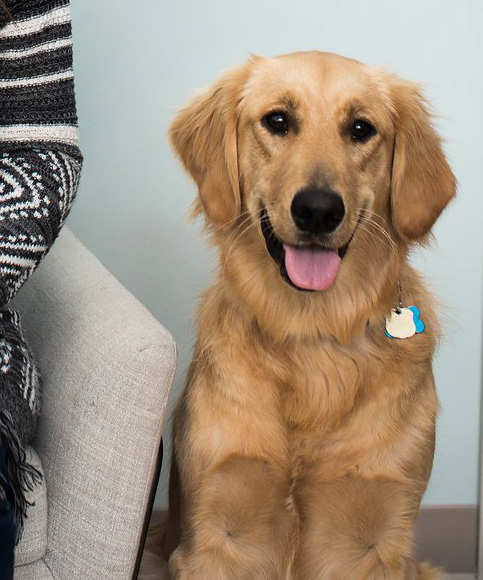 Meet Luna - Melanie also offers animal-assisted therapy with her Golden Retriever, Luna. Melanie believes in the positive power of dogs to respond to our pain, and to offer their care and comfort. Dogs can provide support and affection to help carry us through dark and lonely times. They can also help reduce stress, lower blood pressure, and give of themselves unconditionally. Luna has passed the AKC Canine Good Citizen evaluation and would love to meet you.