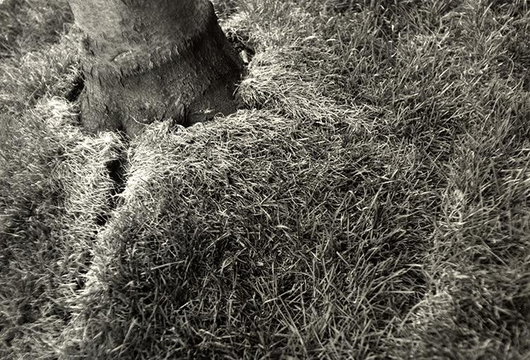 bursting_grass.jpg