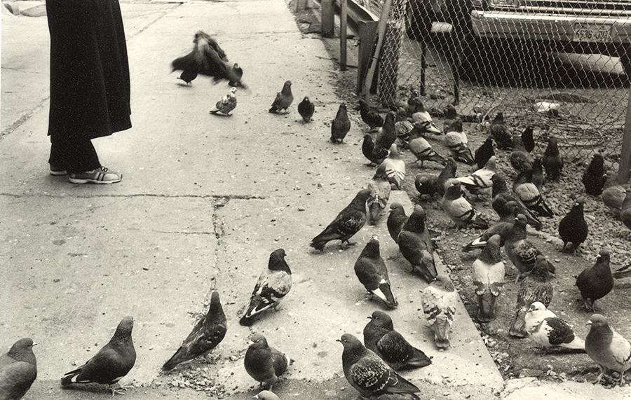 pigeon_feeding.jpg