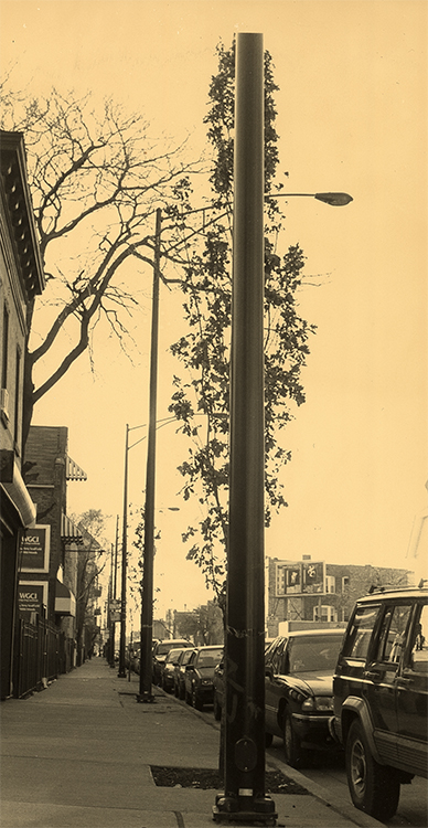 urban_tree_trunk.jpg