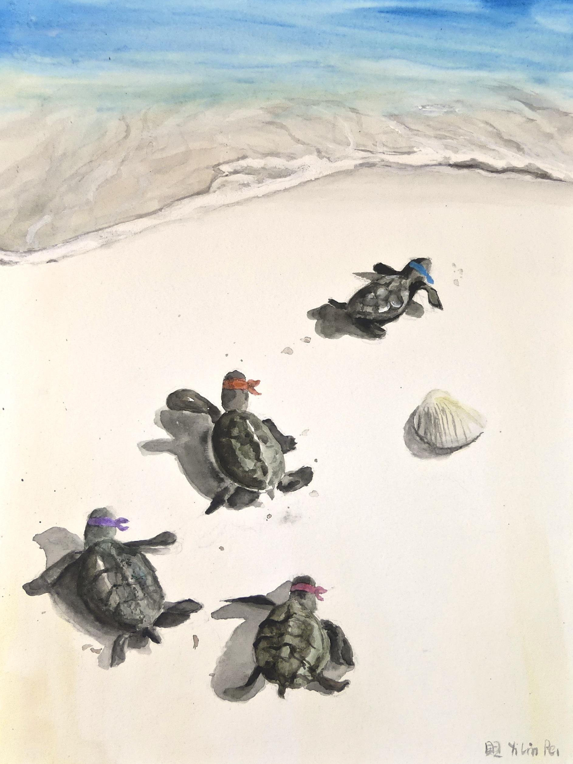 Turtle Ninjas!