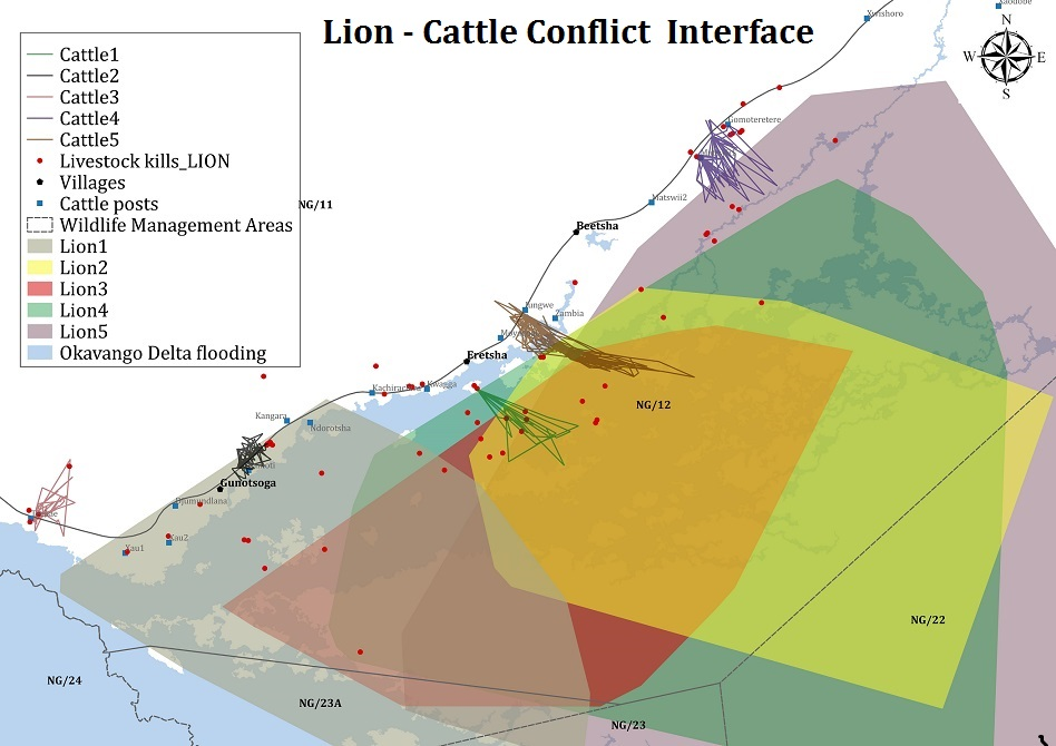 Cattle movements (lines) into lion territories (polygons) where the conflict occurs.