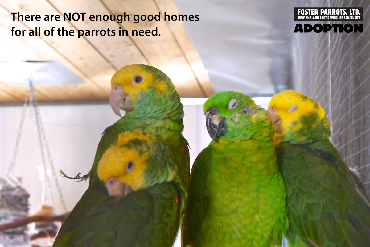 Adoption — Foster Parrots — The New England Exotic Wildlife Sanctuary