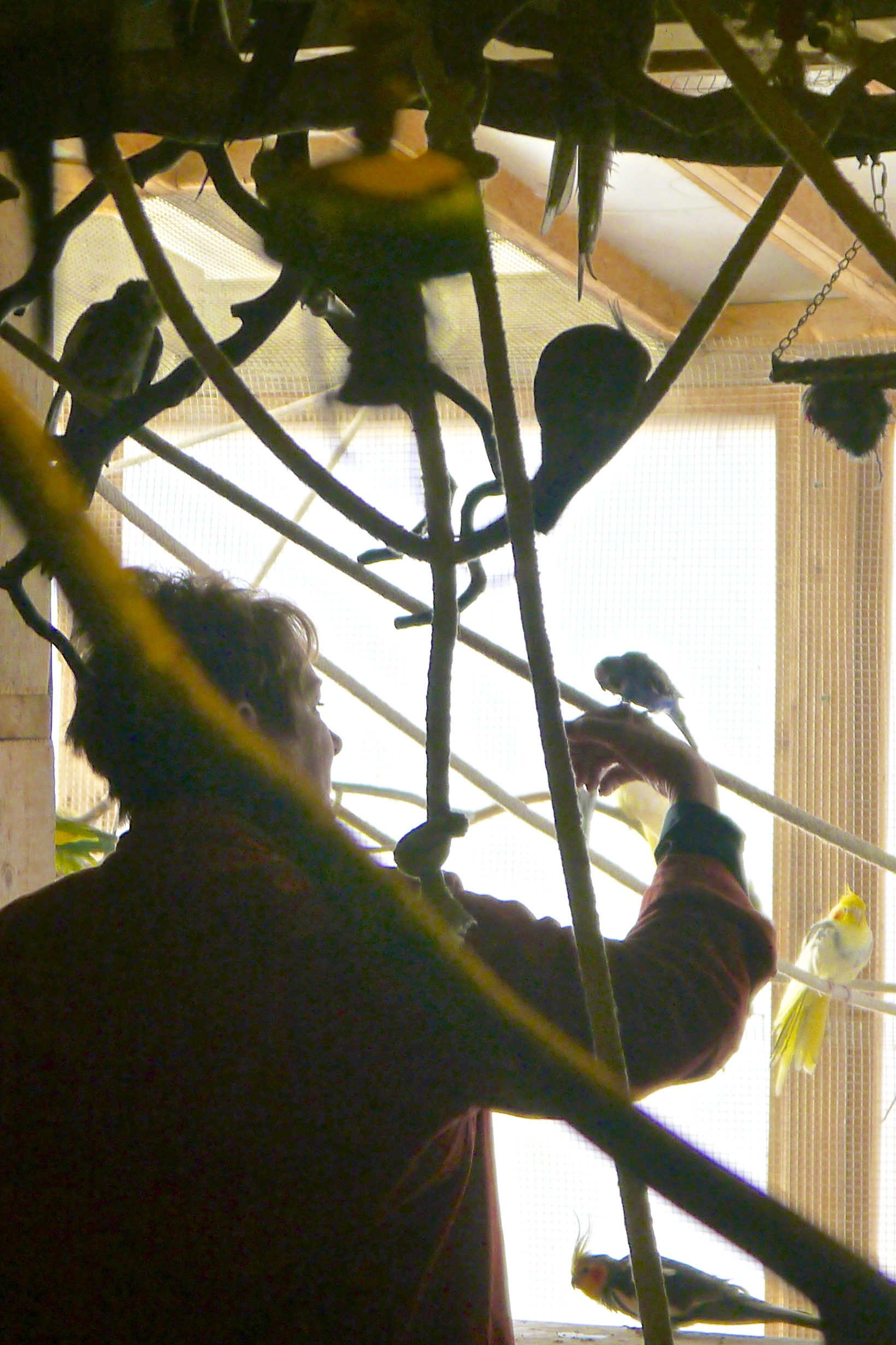 Foster Parrots - Sarah.jpg