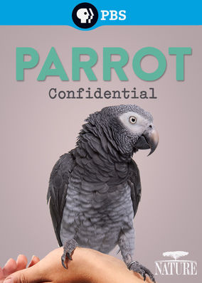 Click to view Alison Argot's award-winning film (some filmed at Foster Parrots) at pbs.org.