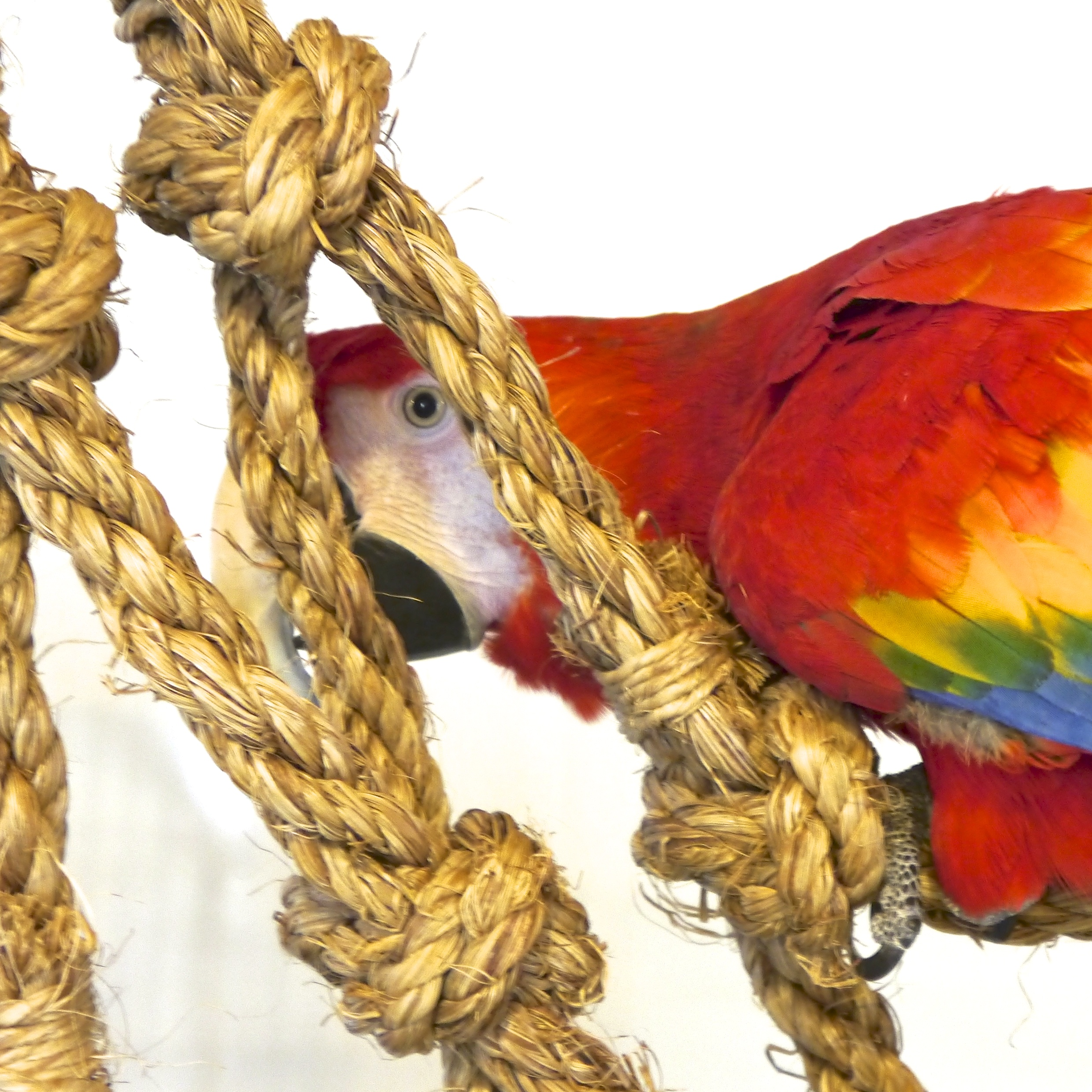 Click to meet some of our birds.