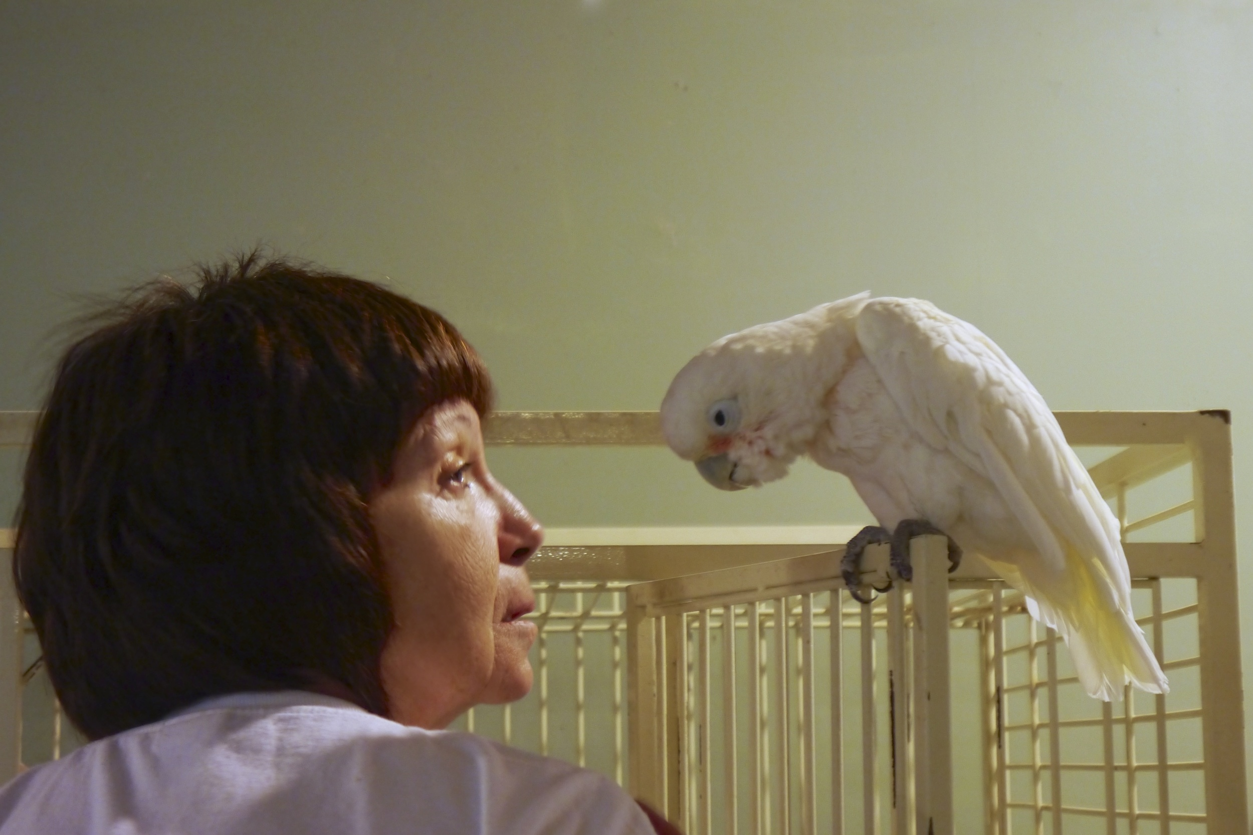 Foster Parrots - Donna, George.jpg