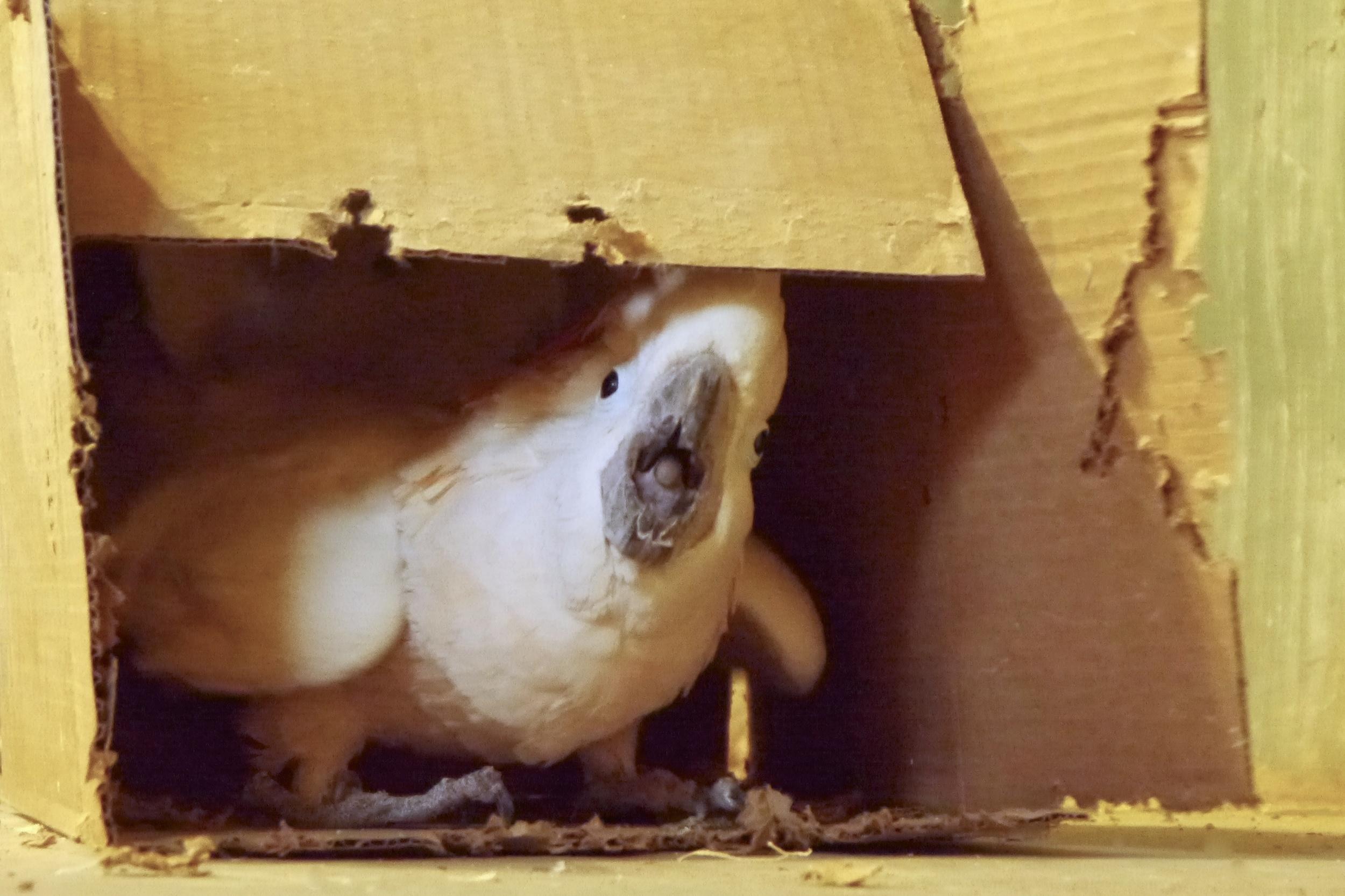 Foster Parrots - Magoo.jpg