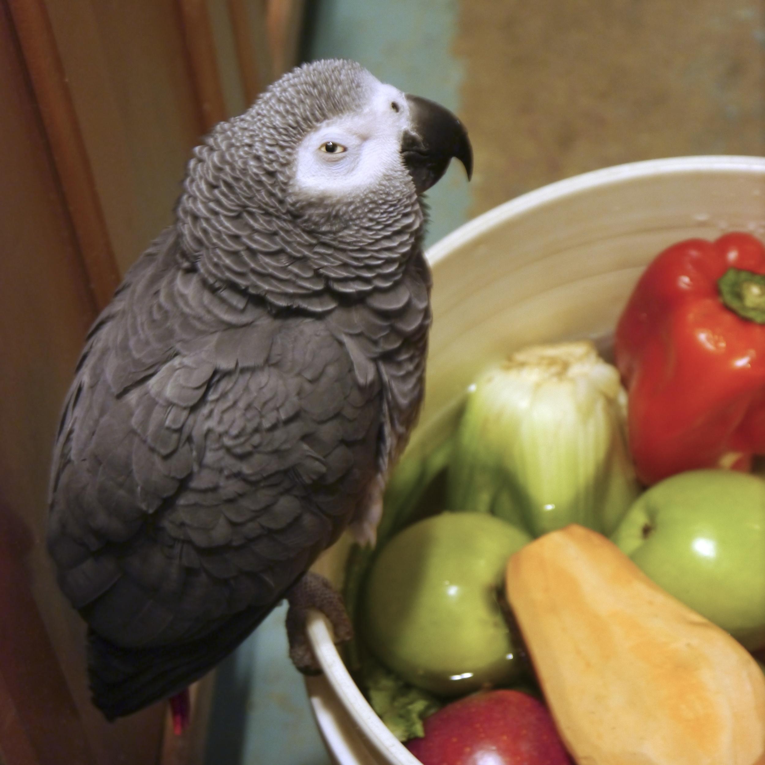 Foster Parrots - Jacoue.jpg