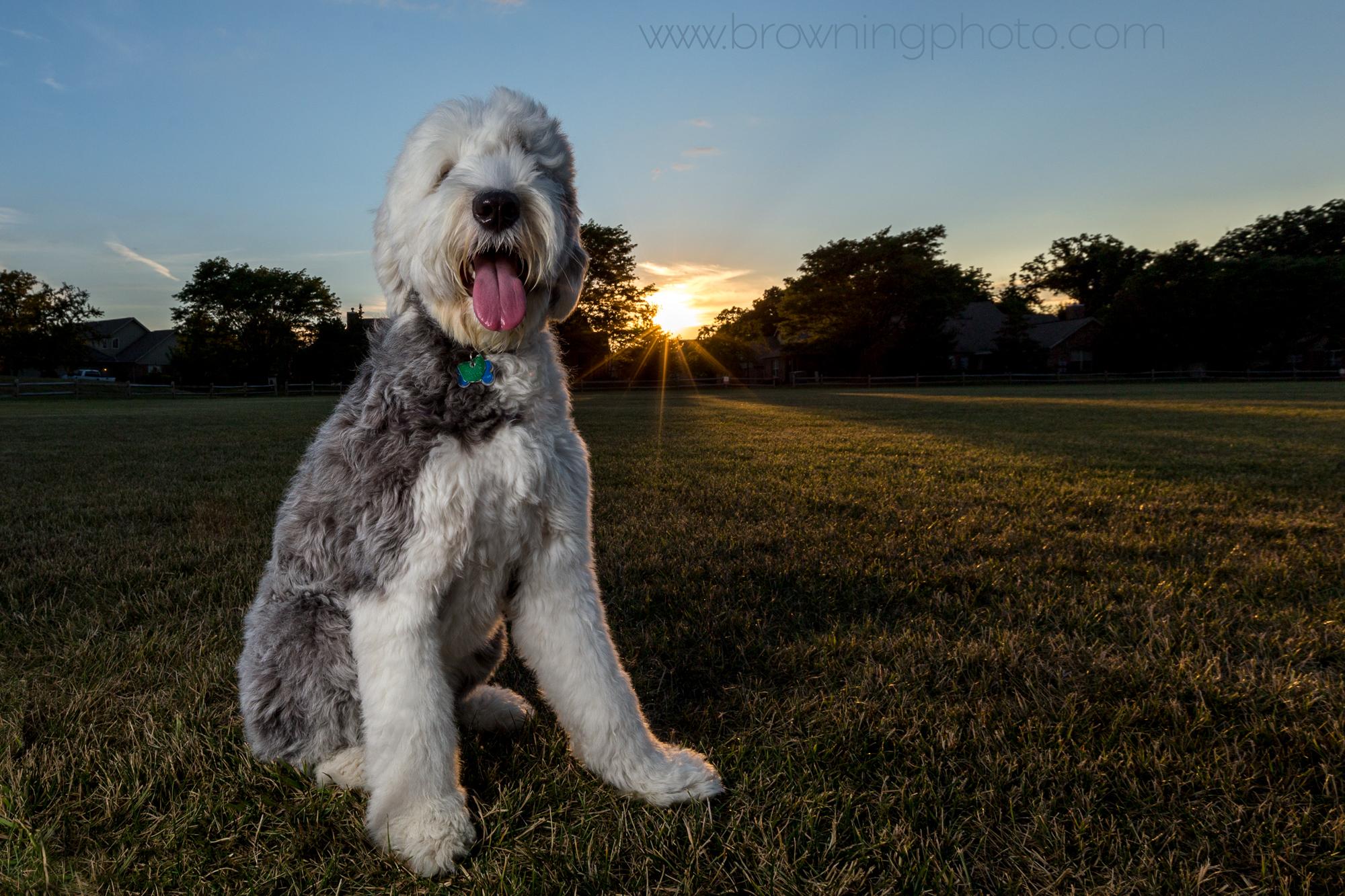columbus dog photography-3