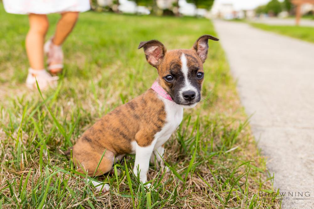 columbus dog photography-1