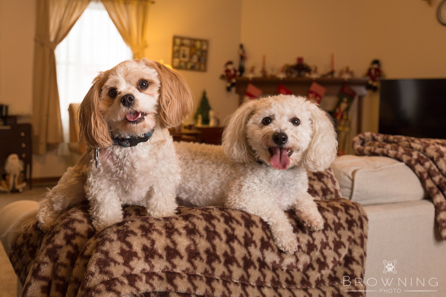 christmas-dogs-at-home-1
