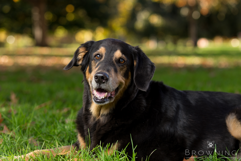 best dog photography columbus oh