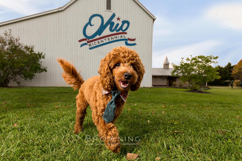 dog homestead park hilliard ohio