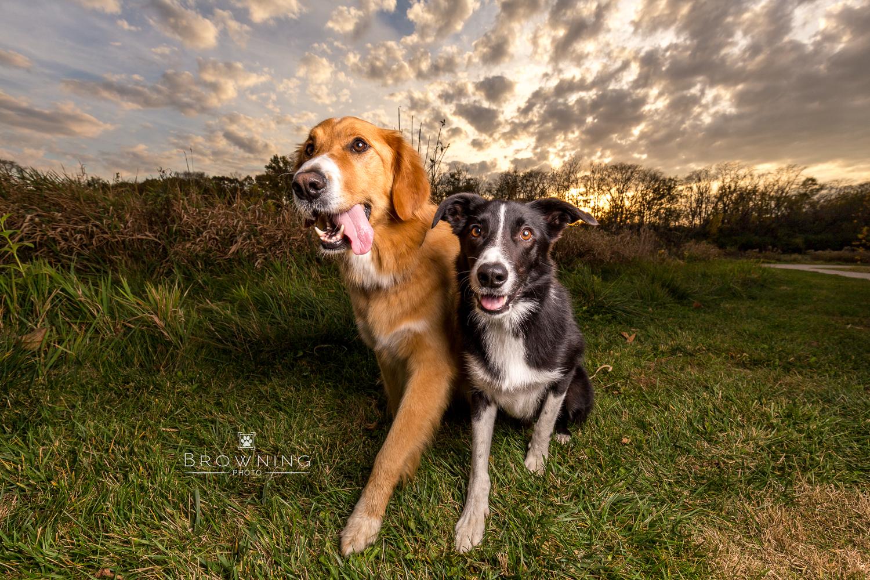 best dog photography columbus ohio 1