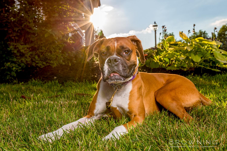 dog-photography-columbus-ohio-27