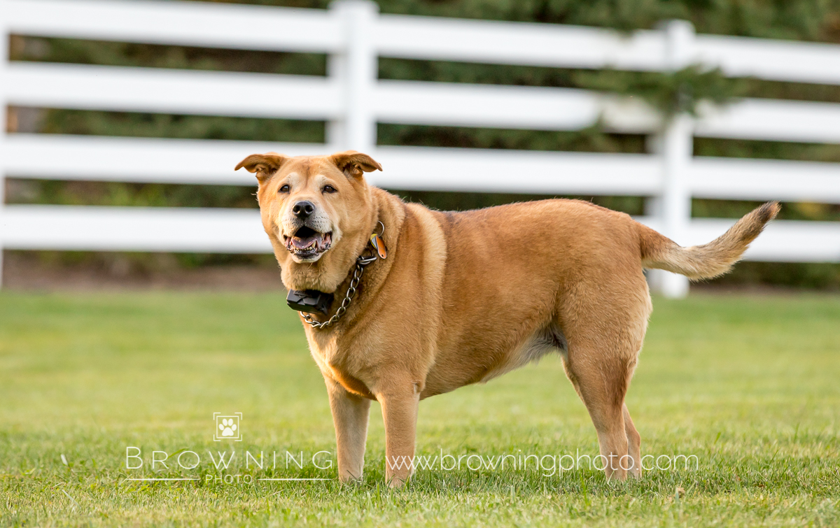 four-rescue-dogs-2