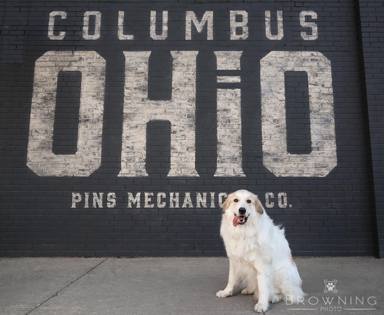 columbus ohio pins dog