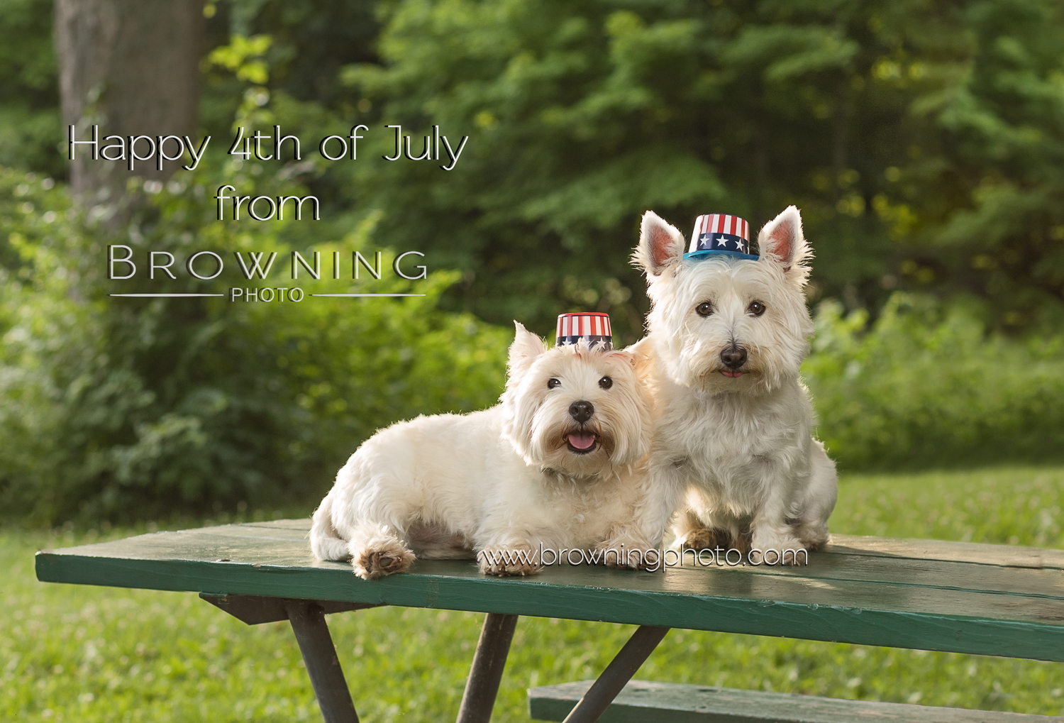 dogs fourth of july