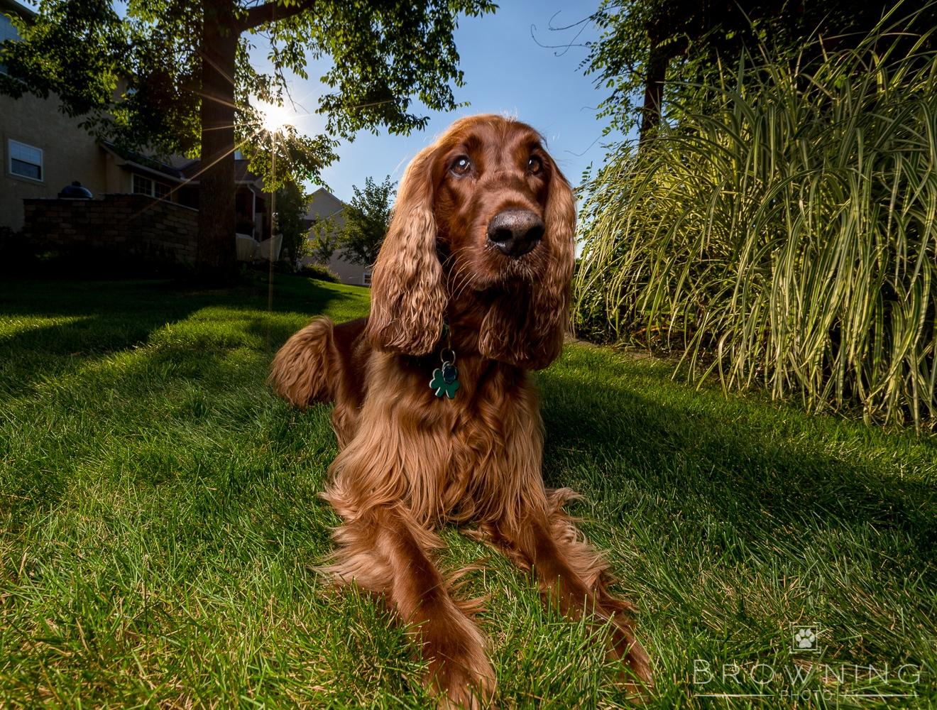 best dog photography columbus ohio