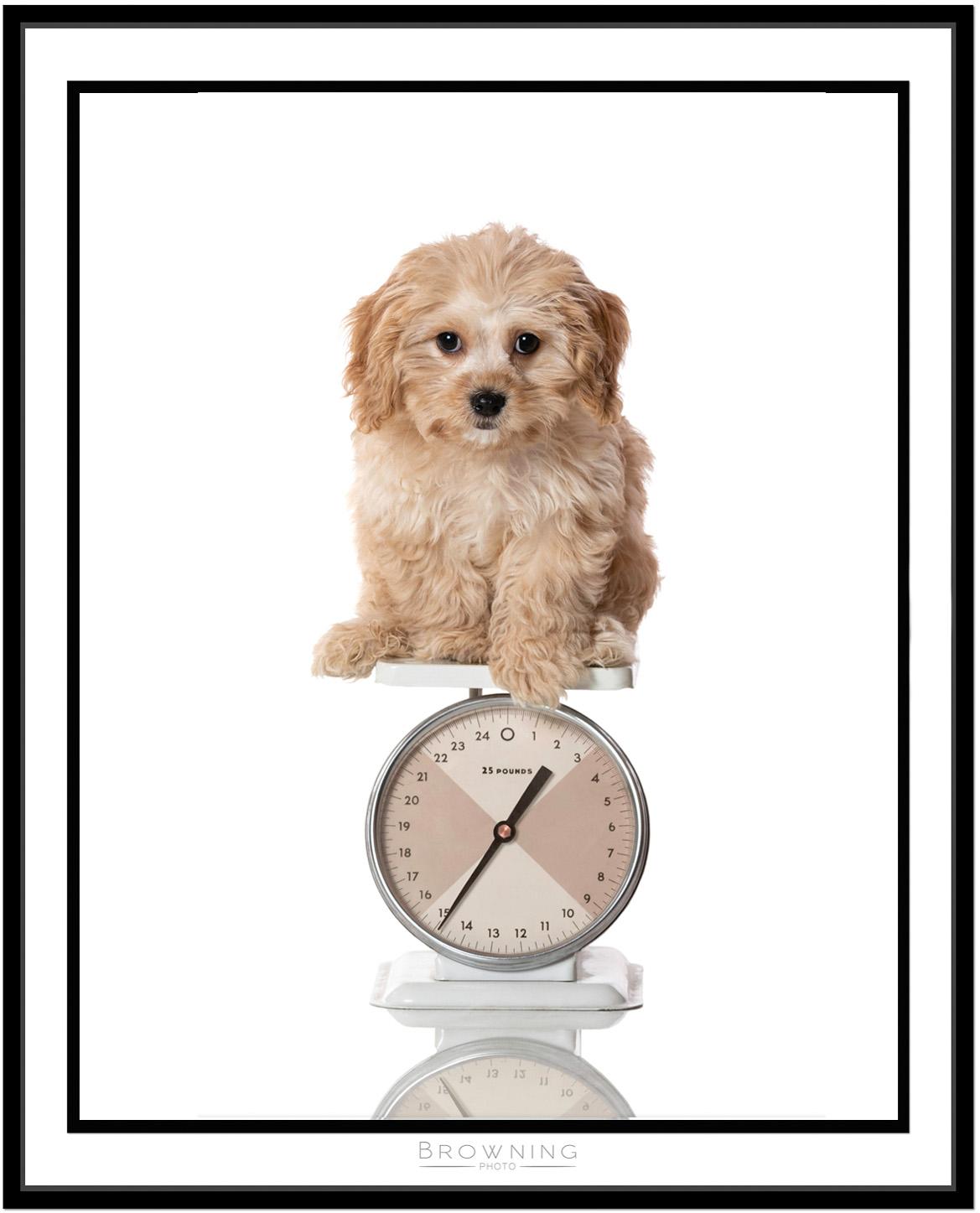 website puppy framed 1500 tall.jpg