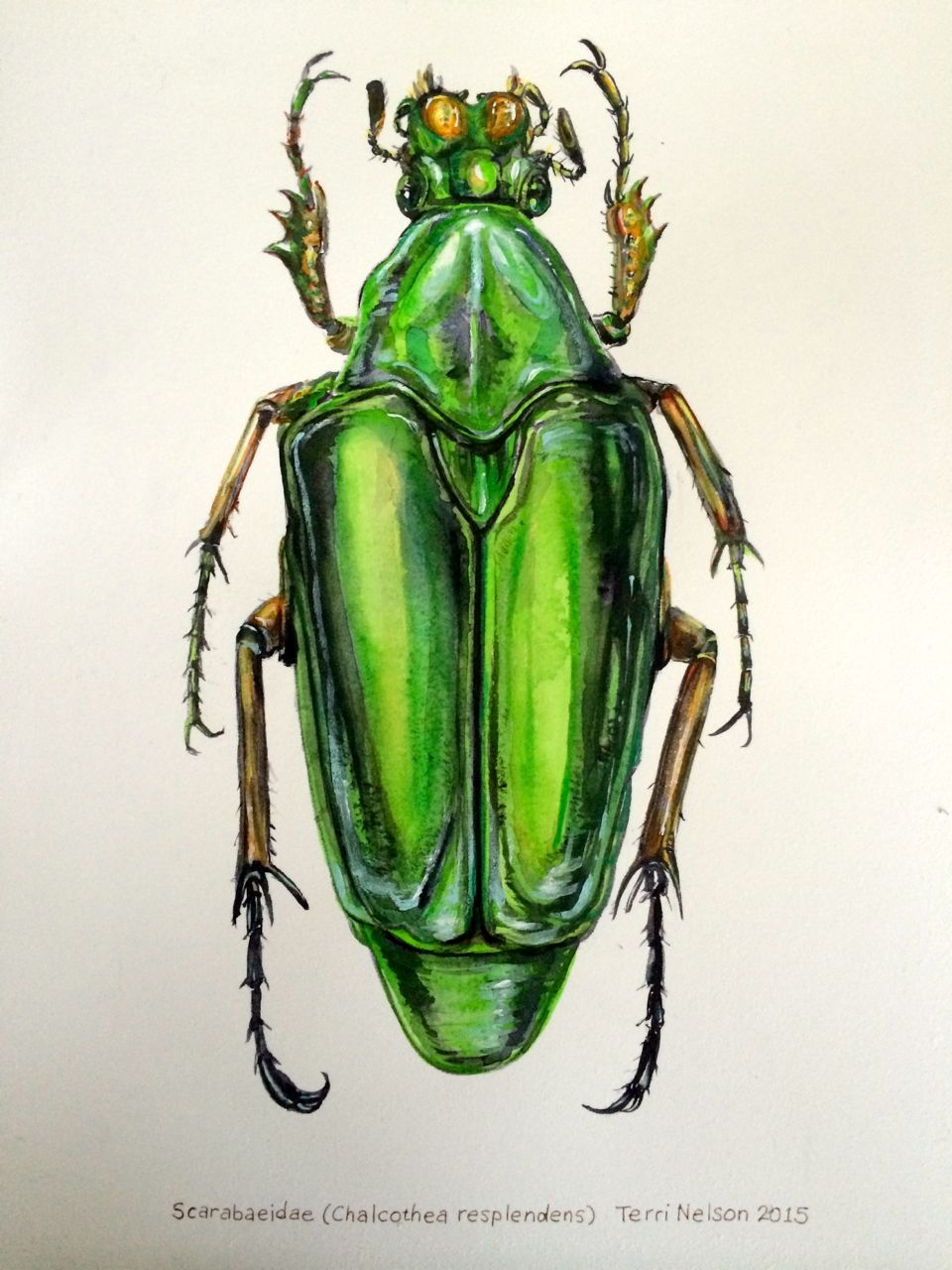 "Scarab Beetle (watercolor, 10""x14"") by Terri Nelson"