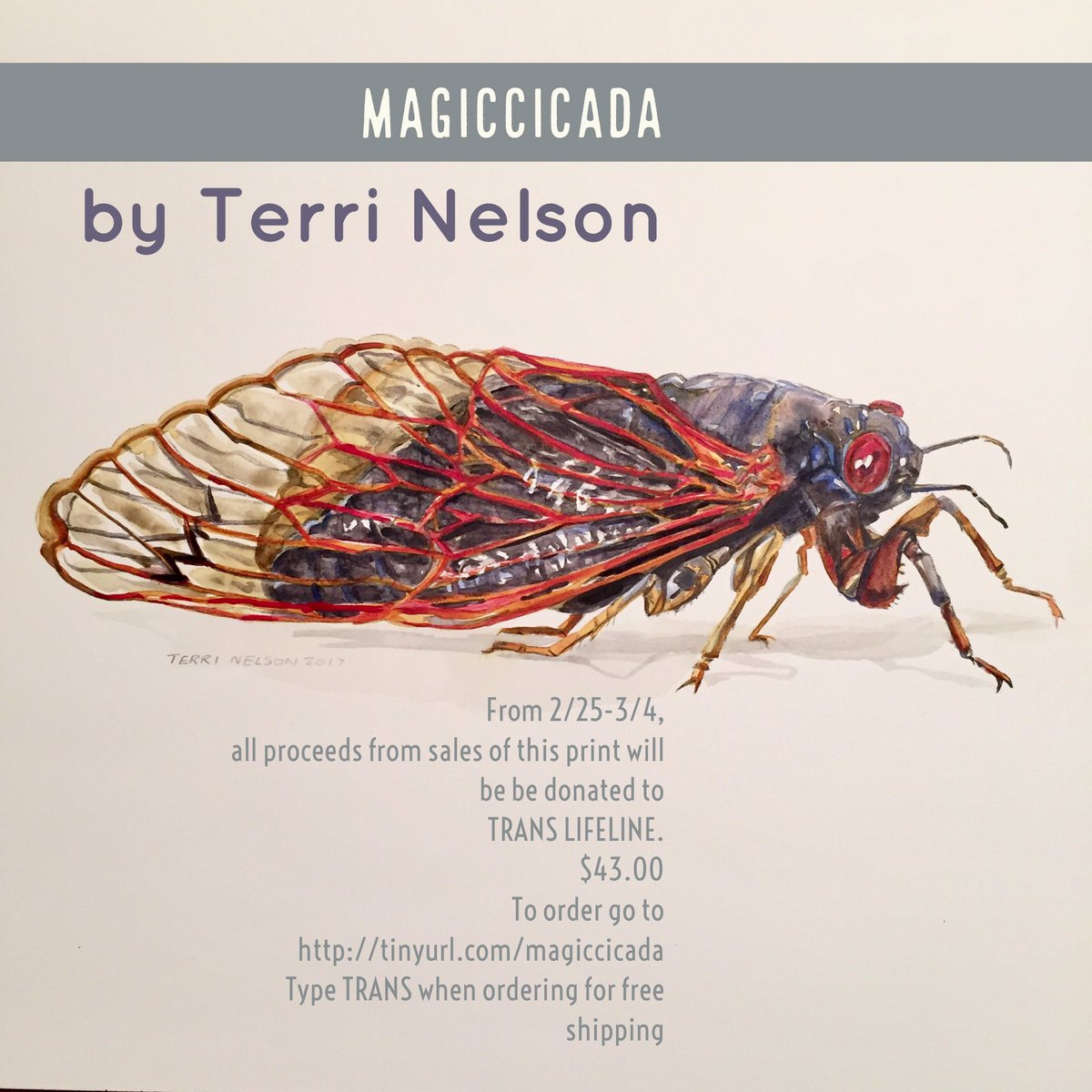 "For the week of Feb. 26 through March 3, all proceeds from sales of this print will be donated to the Trans Lifeline.  Type TRANS in when you order to get a $12.00 discount in shipping and handling, too, because you're a nice person.  Why a cicada?  Well, this isn't any old cicada.  The Periodic Cicada has a mysterious life cycle in which ALL of them spend either 17 or 13 years underground in their juvenile form, and then at an unknown signal, they emerge all at once and take on their adult forms.  This seemed like a pretty apt metaphor for the lives of all the trans people I've known.   When the Republicans decided to discriminate against trans kids recently, I decided to do what I can to help the Trans Lifeline.  So, for this week, I will be donating every bit of the proceeds for sales of this print to the Trans Lifeline.   (If you're wondering, it's called ""Magiccicada"" because that really is part of the latin name for this species.)"