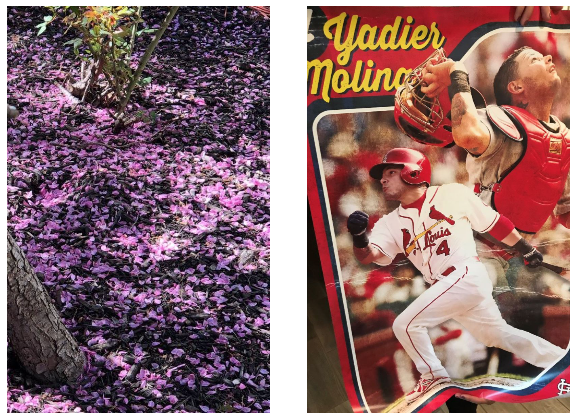 Signs of spring... a pink snowfall after an April shower and the opening of baseball season. (This is a poster soon-to-be-hung in the Baby's room -- YES -- see below!)