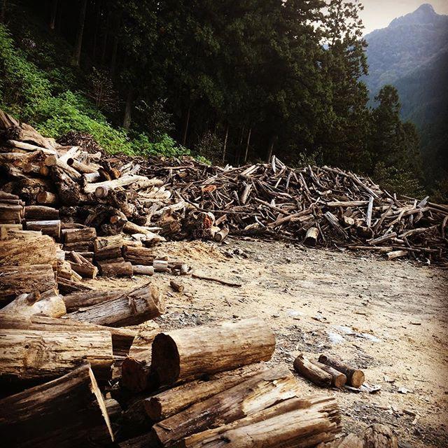 二瀬ダムの流木無料配布。 加工したらいい感じになりそうなやつとかたくさんありましたが、また今度。。。 #秩父  #大滝  #流木  #chichibu  #driftwood  #japan