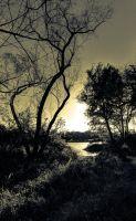 08,DE246,TH,Fall forest sunset.jpg