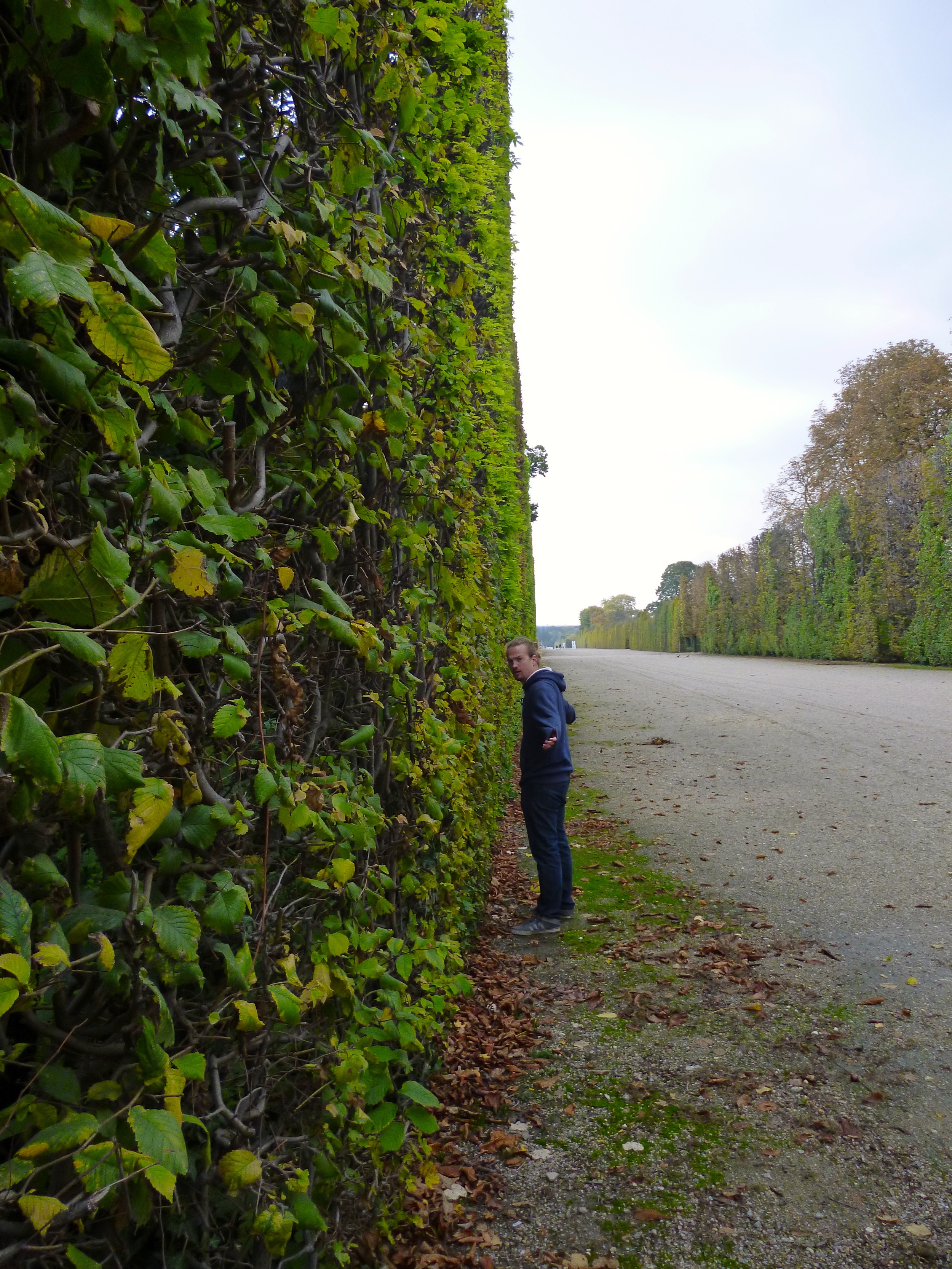Check out how flat this hedge is. And it goes on forever. Who cuts this hedge? How long does that take? How did they do that back in the day? Aliens? Probably.