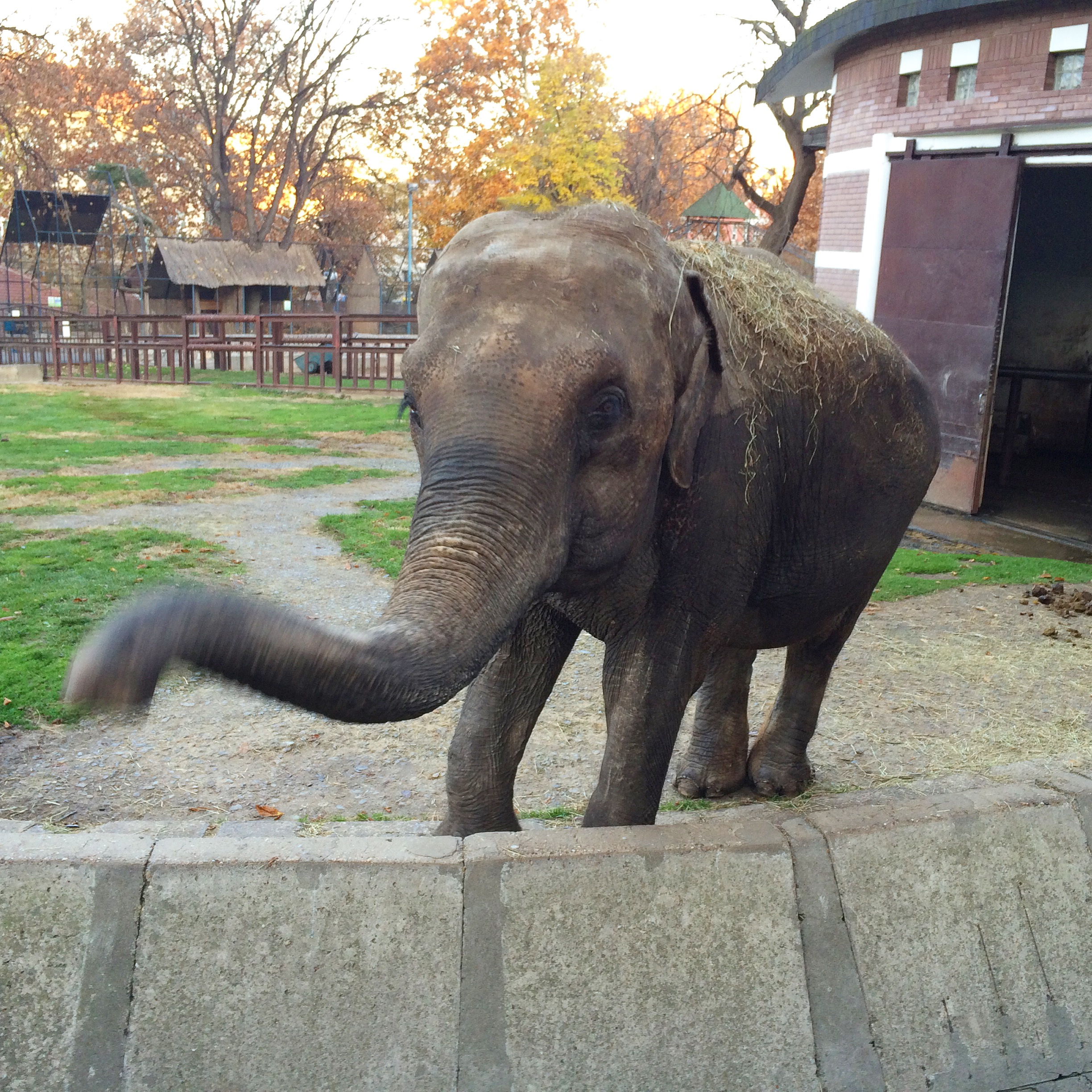 Old pic. But come on. It's an elephant trying to say hi to me.