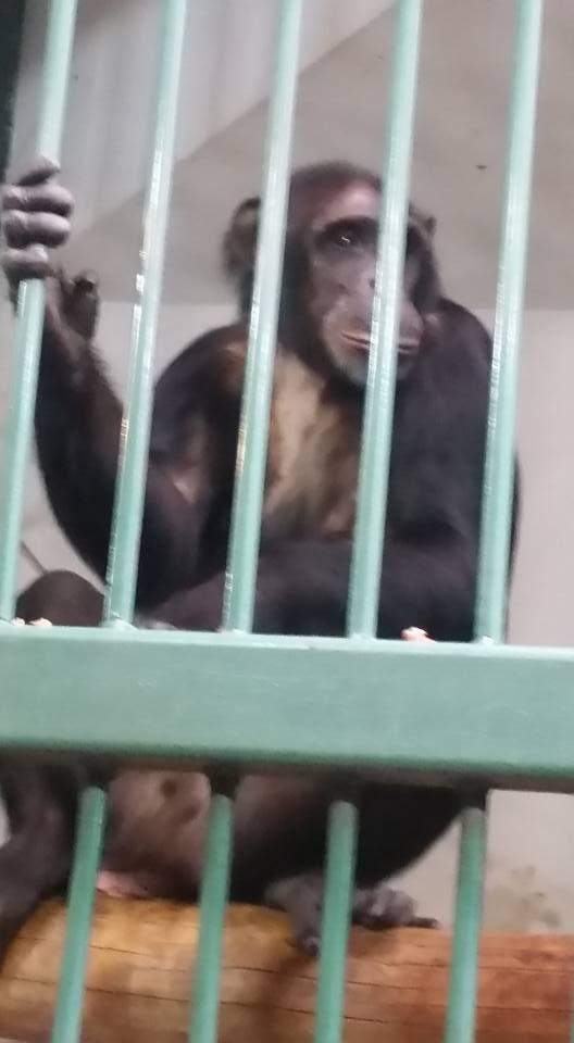 Bad monkey! Bad! Bad! BAD Monkey!