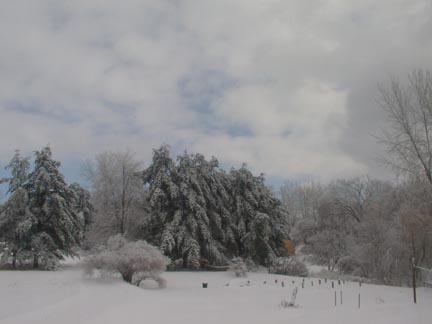 Ice-covered trees